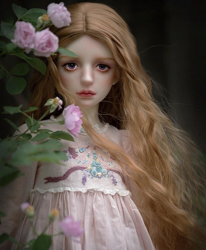 Centaurea_1.jpg